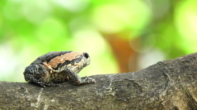 vídeos y material grabado en eventos de stock de hormiga negra comiendo rana toro - insecto