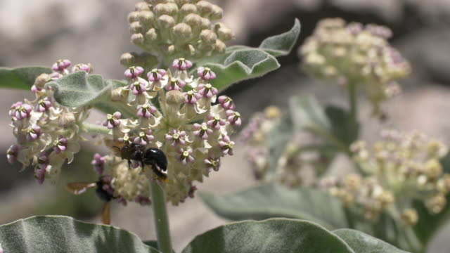 Bumble Bees on flowers Pollination in Spring arthropod stock videos & royalty-free footage
