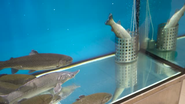 bunch of fish looking at the dead one in shopping mall fish tank - banchi di pesci video stock e b–roll