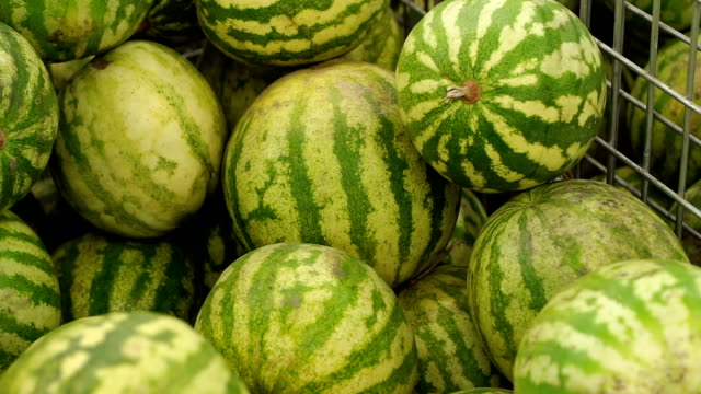 Bunch of fresh watermelons in supermarket. Watermelons at store, close-up. Bunch of fresh watermelons in supermarket. Watermelons heap on open market. Watermelon in the supermarket. Watermelons at store, close-up. Grocery shopping. watermelon stock videos & royalty-free footage