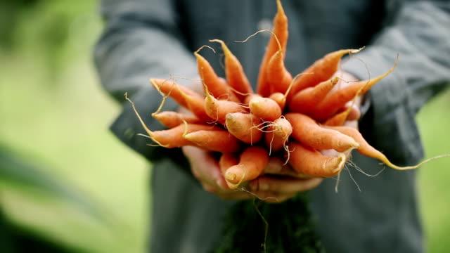 농민의 손에서 유기 당근의 무리 - 유기농 스톡 비디오 및 b-롤 화면