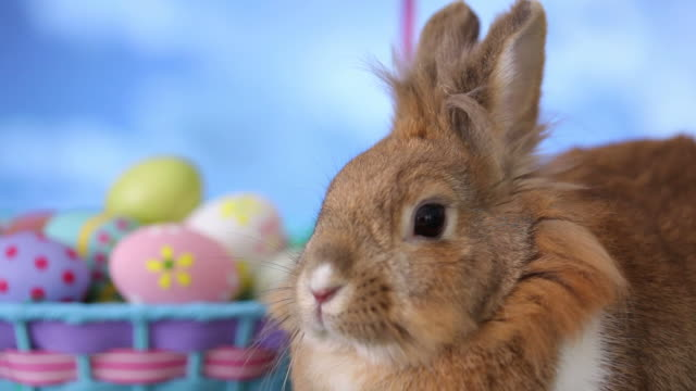 Bunny and Easter basket video