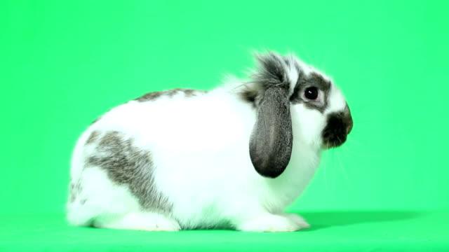 bunny arıyorsunuz - tavşan hayvan stok videoları ve detay görüntü çekimi