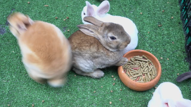 bunny rabbit eating - white background стоковые видео и кадры b-roll
