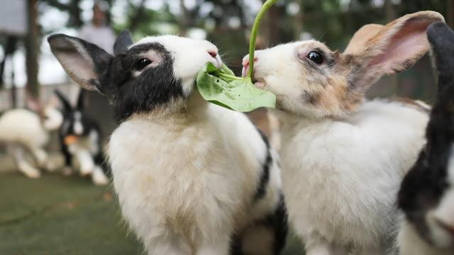 tavşan tavşan gıda hayvan hayvan besleme, yavaş hareket yeme. - tavşan hayvan stok videoları ve detay görüntü çekimi