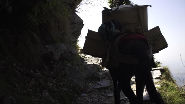 belasteten maultier auf bergpfad - himachal pradesh stock-videos und b-roll-filmmaterial