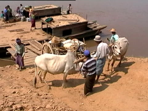 Burma River Ferry with farmers and cattle Cattle and farmers boarding simple river ferry, Burma myanmar stock videos & royalty-free footage