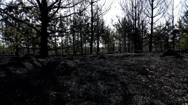 bränd skog och fält efter löpeld, svart jord, aska, rök, farliga djupgående väder, ekologisk katastrof, katastrof, global uppvärmning - skog brand bildbanksvideor och videomaterial från bakom kulisserna