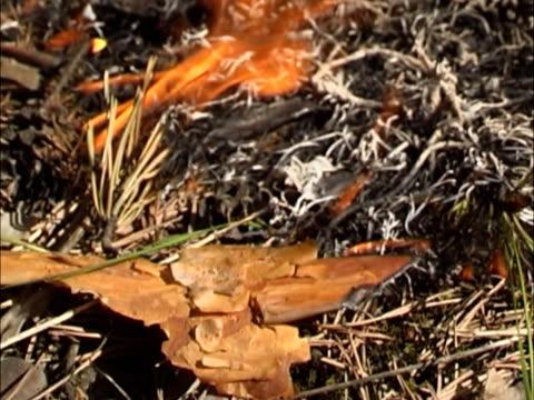 burned grass. - 枝 植物部分 個影片檔及 b 捲影像