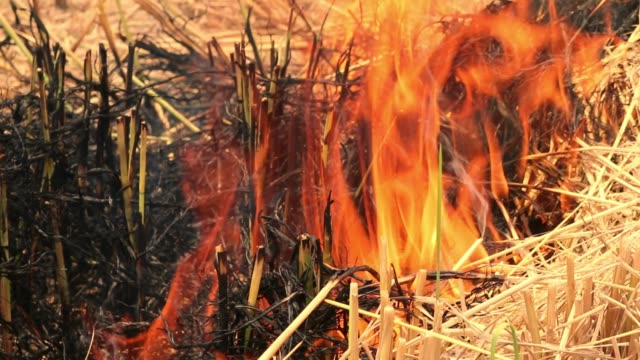 burning agricultural areas, smoke pollution the image of the world and risks from natural disasters - paglia video stock e b–roll