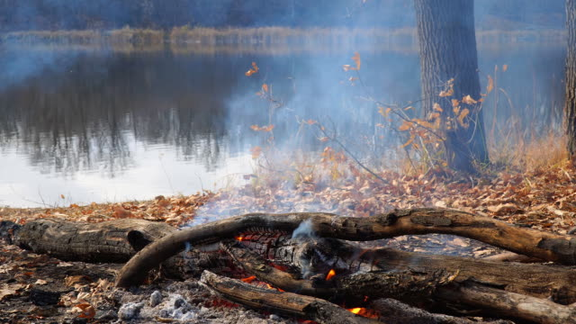 Burning campfire on the shore of an autumn forest lake video