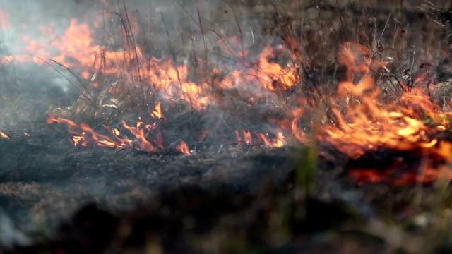 brennen von trockenrasen auf wiese - verbogen stock-videos und b-roll-filmmaterial