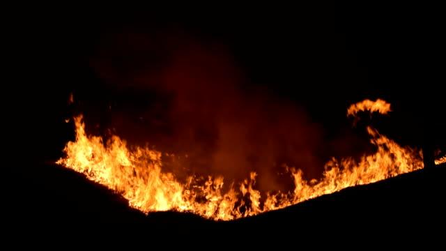 Burning dry grass. video