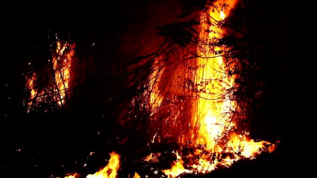 burning fire at night - haryana video stock e b–roll