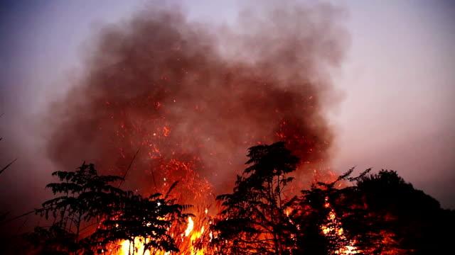 brinnande eld på natten - skog brand bildbanksvideor och videomaterial från bakom kulisserna