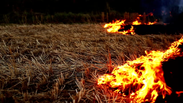 Burning fire in the field
