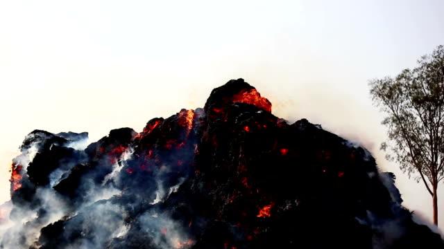 burning fire outdoor during summer season - харьяна стоковые видео и кадры b-roll