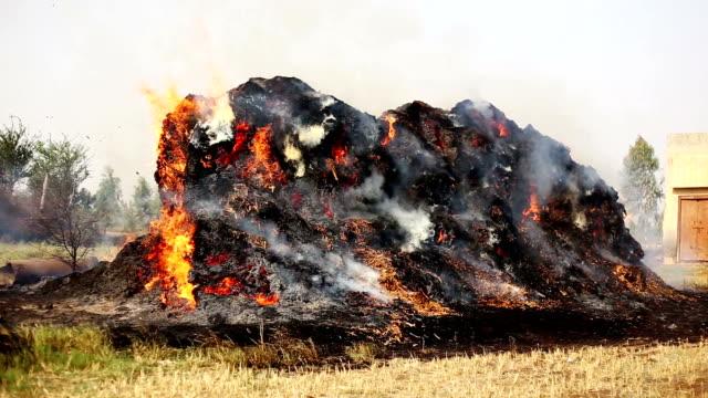 burning fire - haryana video stock e b–roll