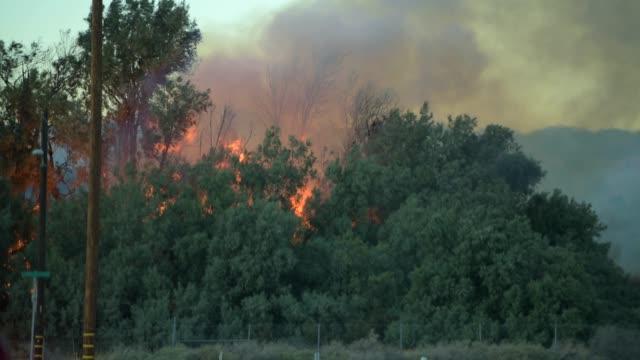 stockvideo's en b-roll-footage met het branden van forest. california wildvuur closeup foto. - bosbrand