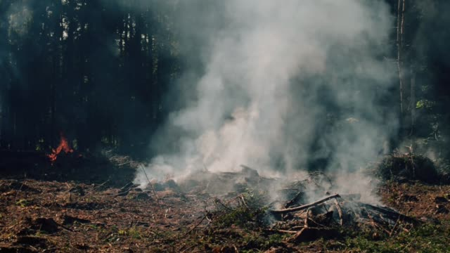 Burning forest video