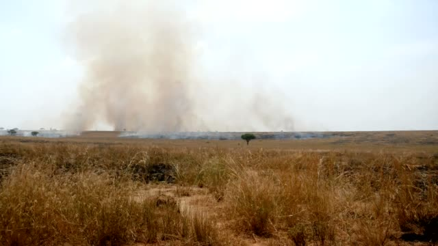burning grass in the wild african savannah in the dry season - засушливый климат стоковые видео и кадры b-roll