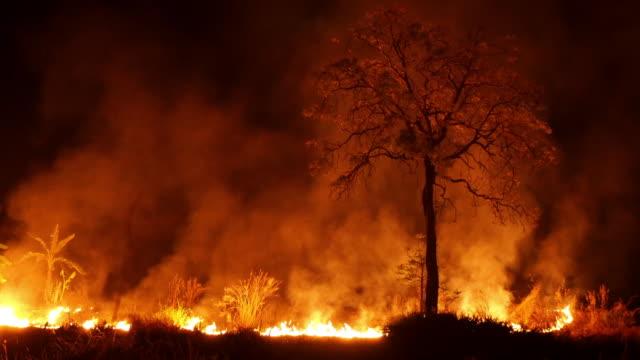 stockvideo's en b-roll-footage met gras des velds nachts branden. - bosbrand