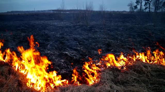 burning grass video