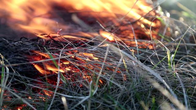 yanan çimen - bunsen beki stok videoları ve detay görüntü çekimi