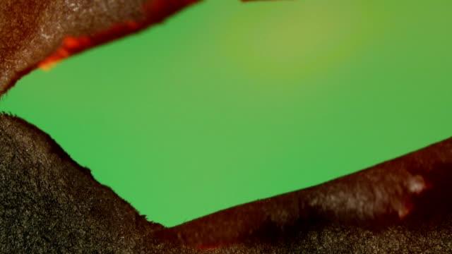 vídeos y material grabado en eventos de stock de quema papel. acercamiento. croma. - ripped paper