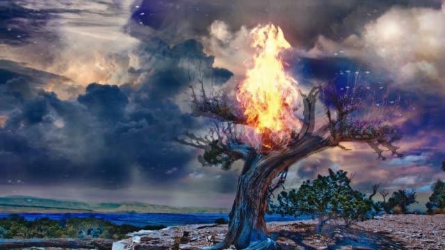 Burning tree at night