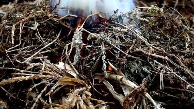 Burning  weeds and twigs video