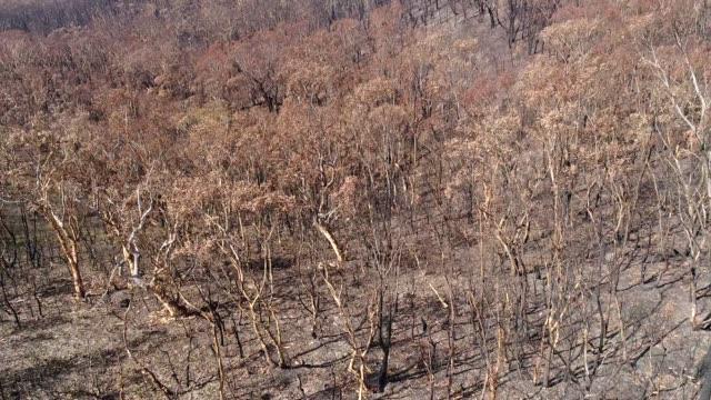 bm bränd - eucalyptus leaves bildbanksvideor och videomaterial från bakom kulisserna