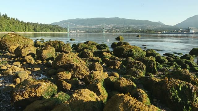 Burrard Inlet Morning, Vancouver video