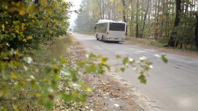 bus drives on the road in the autumn forest. - bus stock videos and b-roll footage