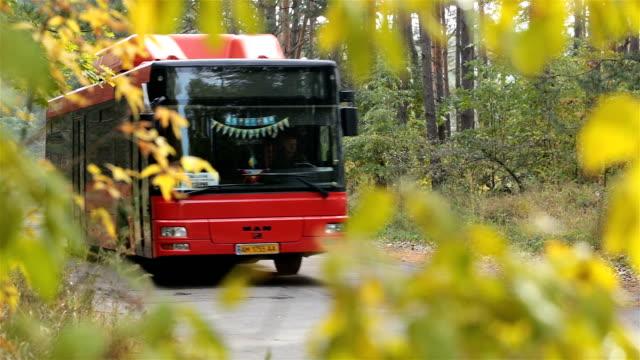 Unidades de autobuses en la carretera en el bosque de otoño. - vídeo