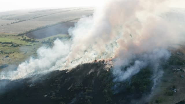 Bush forest wildfire in Voronezh Region, Russia. Natural disaster, aerial drone point of view video
