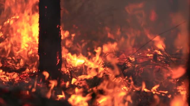 森林火災の消火活動を燃焼 - オーストラリア点の映像素材/bロール
