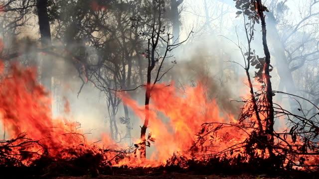 stockvideo's en b-roll-footage met bushfire - bosbrand