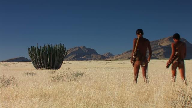 buschmann und einem riesigen kaktus - afrikanische steppe dürre stock-videos und b-roll-filmmaterial