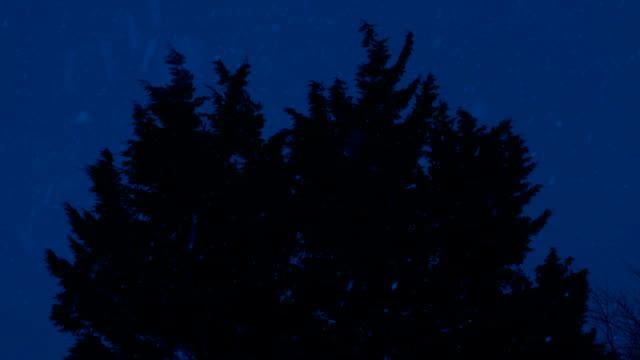 Bushy Tree Sways In Snowfall At Night