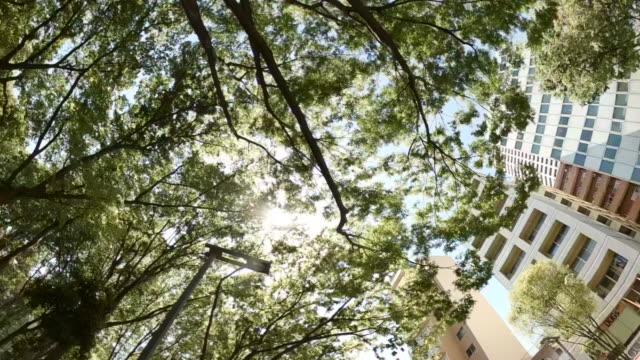 ビジネス地区高層ビル/緑の木 - 空を見上げる - 緑 ビル点の映像素材/bロール
