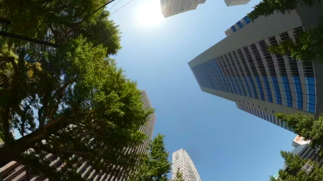 business district skyscrapers/ green tree - look up at the sky - quartiere generale video stock e b–roll