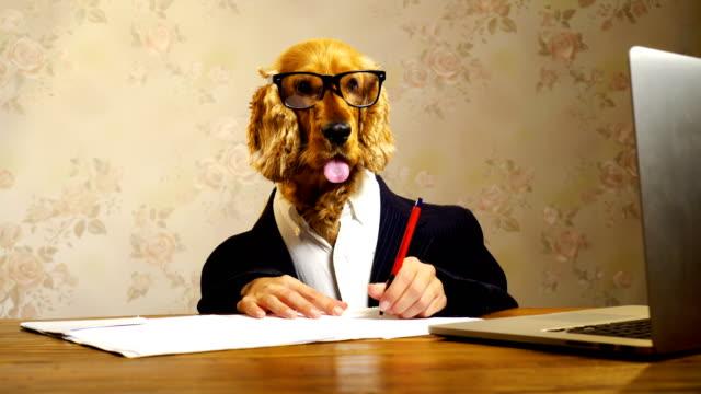 business dog working - костюм стоковые видео и кадры b-roll