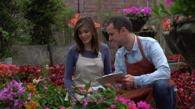 Business owner and employee doing inventory of the flower plants Male business owner and employee doing inventory of the flower plants talking and pointing at the different species plant nursery stock videos & royalty-free footage