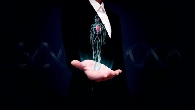 vídeos de stock e filmes b-roll de businesswoman open palm, rotating human cardiovascular system, blue x-ray light. - aorta