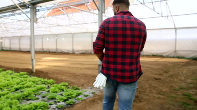 Bussinesman in agriculture video