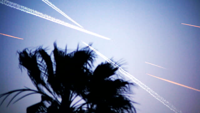 Busy air traffic contrails behind palm tree video