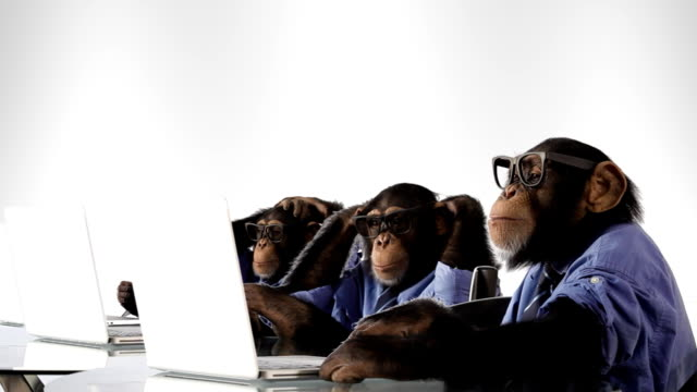 Busy Team Monkey video
