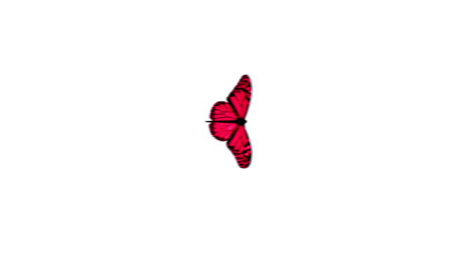 Butterflie video