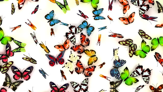 butterflies background video